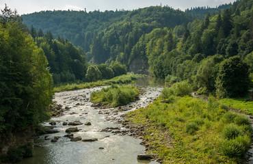 Fototapeta na wymiar Mountain river flows among trees in forest