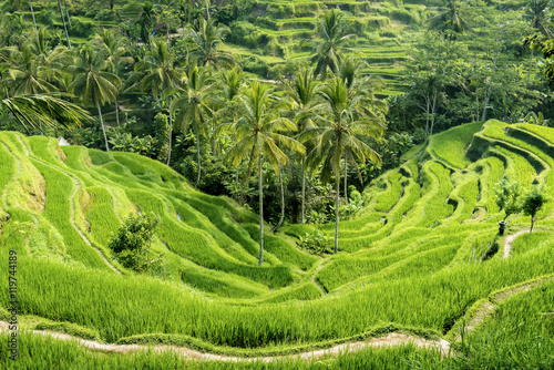 Garden Poster Rice fields The Tegallalang Rice Terraces in Bali, Indonesia