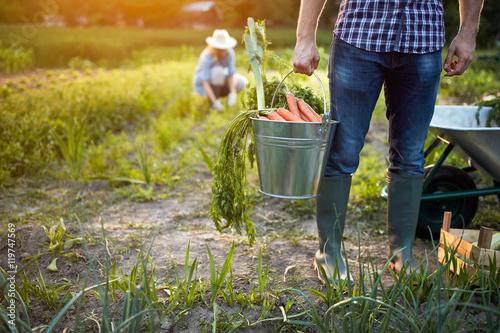 Fotobehang Indiërs Carrots in metallic bucket, close up