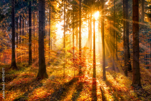 Vászonkép Sonnendurchfluteter Herbstwald