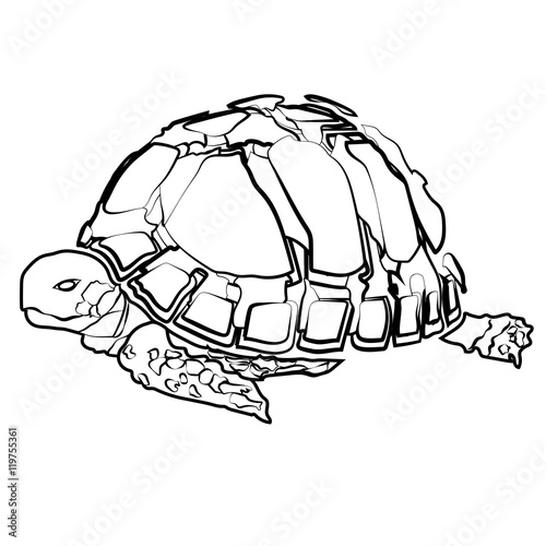 Poster Retro sign sketch shape turtle sea icon cartoon design abstract illustration animal