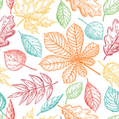 Fototapeta Las Seamless vector pattern with colorful autumn leaves. Hand drawn