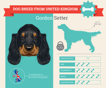 Gordon Setter Dog Breed Vector...