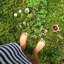 Piedi Funghi Foresta