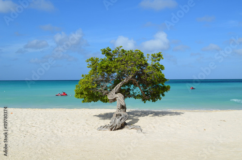 Pristine Eagle Beach with a Divi Divi Tree Poster