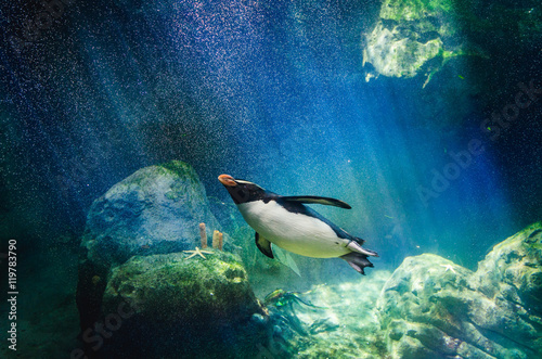 La pose en embrasure Pingouin Penguin diving