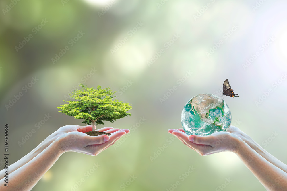Fototapeta World environment day concept with tree care planting and CSR green earth on volunteer's hands for sustainable environmental development. Element of this image furnished by NASA