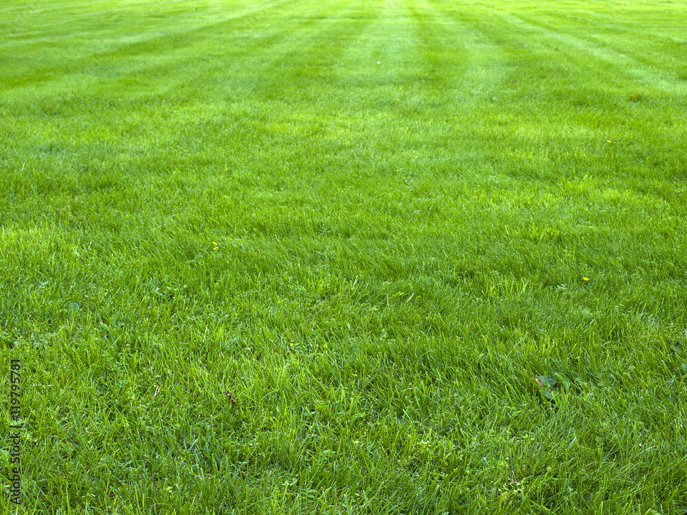 Fototapety, obrazy: fresh spring green grass, green grass texture or background