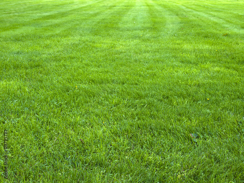 Poster Gras fresh spring green grass, green grass texture or background