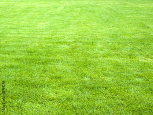 Photo sur Toile Herbe Close-up image of spring green grass