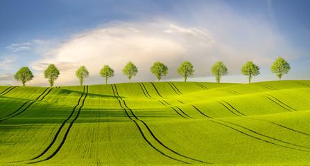 Panel Szklany Wiejski Wiosenne pole