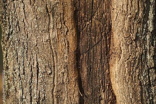 Fotografija  Tree Trunk Closeup