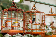 Birds In Cages Hanging At The Bird Garden And  Market In Yuen Po