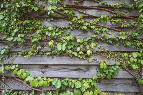 naturalna-zielona-lisc-sciana-i-drewniani-scienni-panel-eco-zyczliwy-tlo
