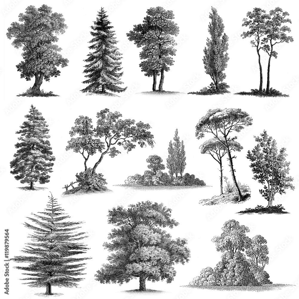 Zestaw 13 ręcznie rysowane Vintage drzew