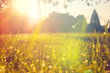 canvas print picture - Meadow in the Morning Light with some Dew on the Grass