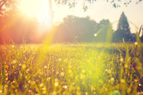 Meadow in the Morning Light with some Dew on the Grass - 119884926