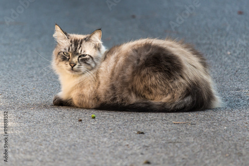Valokuva  gatto rilassato