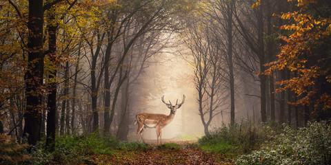 Panel Szklany Popularne Damhirsch auf einem Weg im verträumt nebeligen Wald
