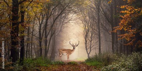 Foto op Canvas Chocoladebruin Damhirsch auf einem Weg im verträumt nebeligen Wald