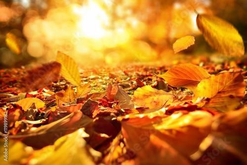 Fotografia  Stimmungsvolle Szene im Herbst mit fallenden Blättern und warmer Sonne