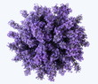 Top view of a bouquet of lavender flowers on a white background. Bunch of purple lavandula flowers. Photo from above.