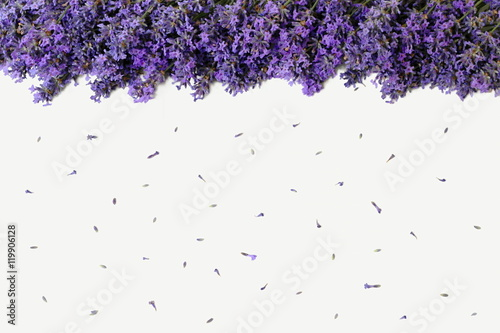 Top view of an edge formed of lavender flowers on a white background top view of an edge formed of lavender flowers on a white background floral background mightylinksfo