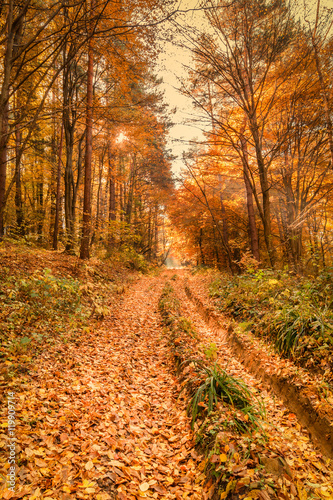 Beautiful fall autumn forest landscape old road