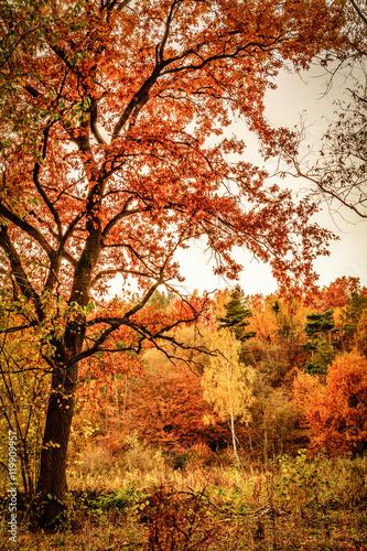 Deurstickers Herfst Autumn forest landscape