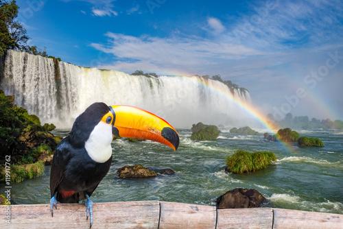 Toucan at the majestic cataratas Iguasu Falls