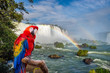 The macaw parrot at the Cataratas of Iguacu