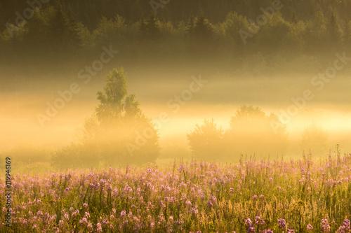 Foto op Plexiglas Weide, Moeras Flowers, bushes, forest and golden mist at the sunrise. Ural, Russia