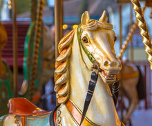 Horse In A Merry Go Round