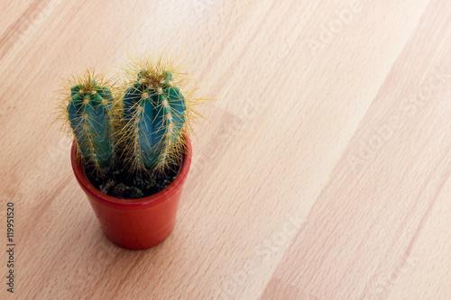 Papiers peints Cactus Cactus plant with thorns