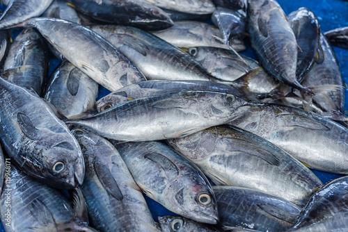Photo fresh tuna