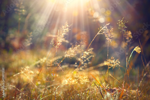 Aluminium Prints Autumn Beautiful nature background. Autumn grass with morning dew in sun light closeup