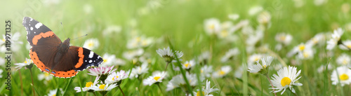 Foto op Canvas Pistache Blumen 696