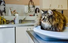 Chat Examen Vétérinaire