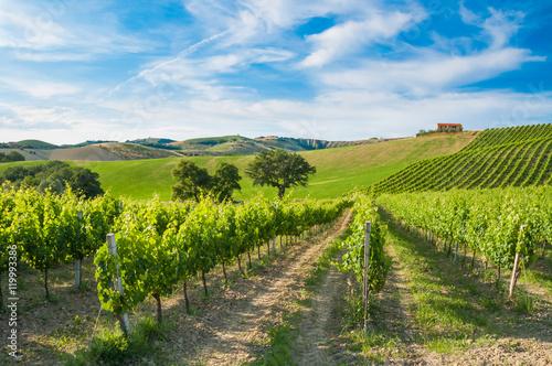 Papiers peints Vignoble Rows of vineyard among hills