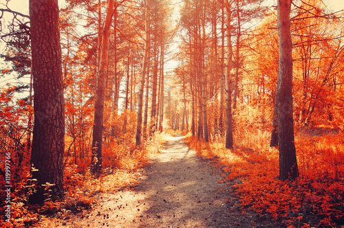 Poster Cuban Red Forest sunny autumn landscape