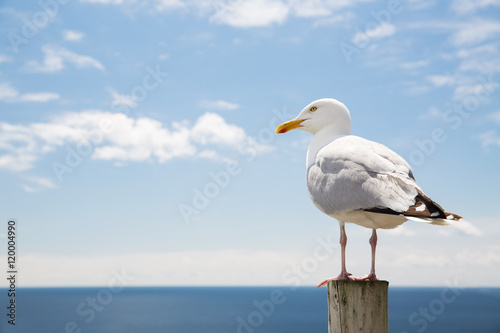 seagull over sea and blue sky Fototapeta