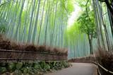 Fototapeta Bambus - 嵯峨野 竹林の道