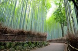 Fototapeta Bamboo - 嵯峨野 竹林の道