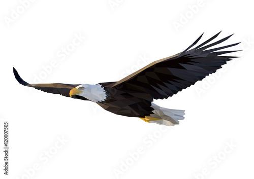Fototapeta Eagle flies