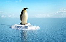Single Penguin On A Piece Of Ice