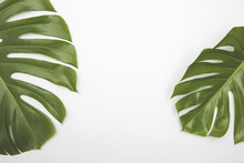 Large Green Tropical Leaf From...