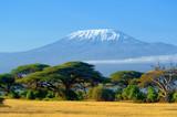Fototapeta Sawanna - Kilimanjaro on african savannah