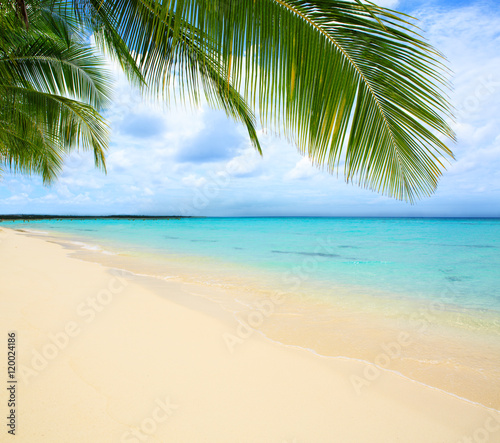 Caribbean sea and palm leaves. Wall mural