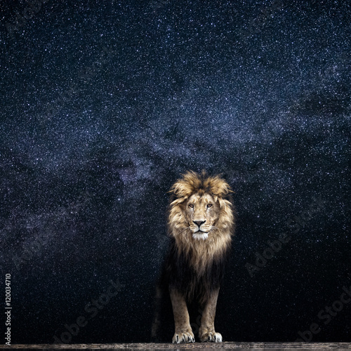 Recess Fitting Lion Lion and the starry sky, king among the stars