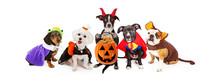 Five Dogs Wearing Halloween Co...